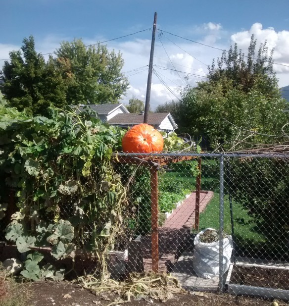 A large pumpkin sitting on top of a pergola