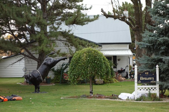 A statue of a rodeo bull in a front yard