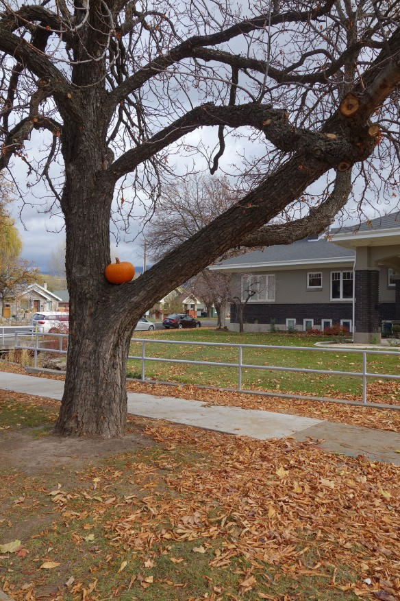 A large pumpkin perched in a tree