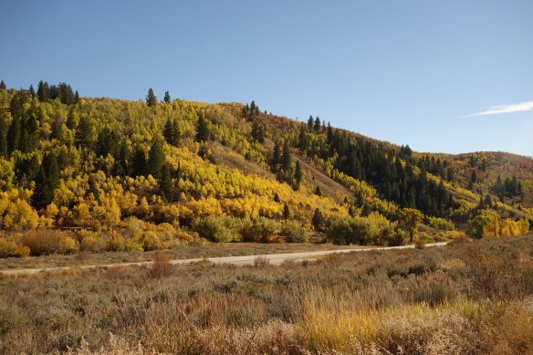 Yellow aspens along a dirt road