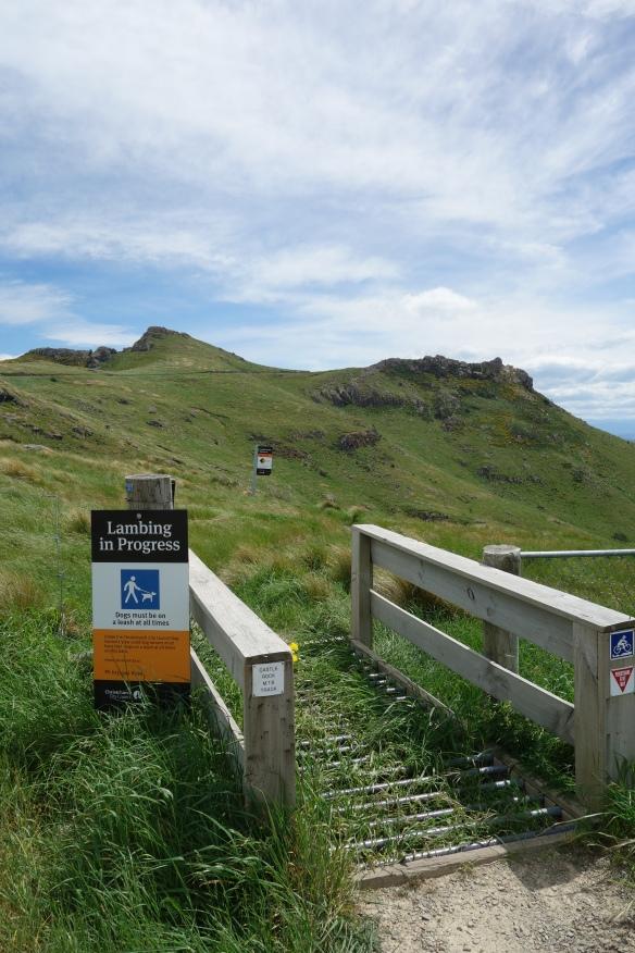 "A sign near a hiking trail ""Lambing in Progress"""